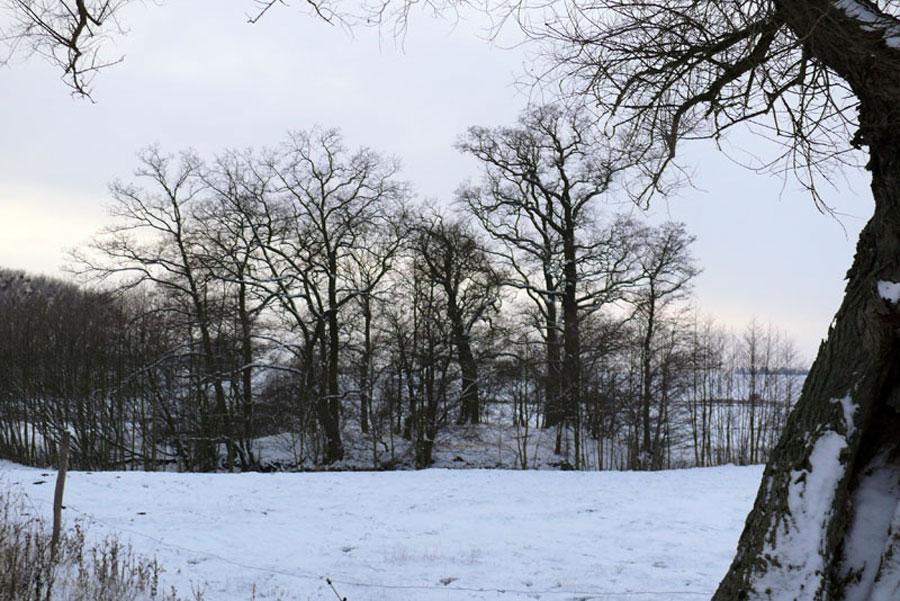 Frühdeutscher Turmhügel bei Schorrentin (Foto: F. Ruchhöft)