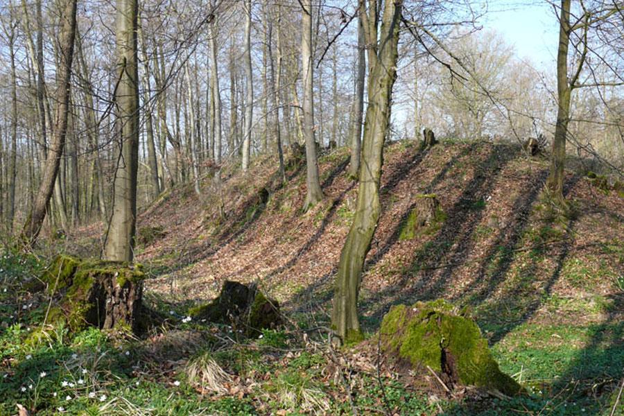 Burgstellen in Fincken (Foto: F. Ruchhöft)